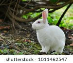 Stock photo cute white rabbit in the garden 1011462547
