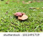 the brown leafs on green grass | Shutterstock . vector #1011491719