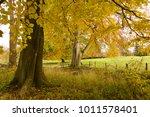 autumn in english woodland | Shutterstock . vector #1011578401
