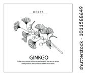 collection ginkgo biloba... | Shutterstock .eps vector #1011588649