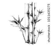 bamboo  sketch vector graphic... | Shutterstock .eps vector #1011635275