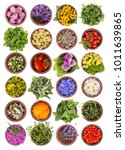 Small photo of Large collection of different herbs and flowers isolated on white background. Set of fresh blooming medical herb and berries for tea