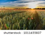 Colorful Sunset At A Wheat...