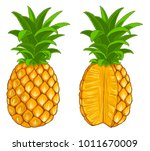 pineapple   whole fruit and... | Shutterstock .eps vector #1011670009