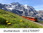 A tourist train travels on Jungfrau Railway from Jungfraujoch (Top of Europe) to Kleine Scheidegg & wild flowers bloom on a green grassy hillside under blue sunny sky in Bernese Oberland, Switzerland