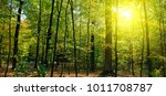 autumn forest  yellow leaves... | Shutterstock . vector #1011708787