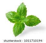 fresh peppermint leaves... | Shutterstock . vector #1011710194