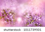 selective and soft focus on... | Shutterstock . vector #1011739501
