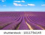lavender flowers blooming... | Shutterstock . vector #1011756145