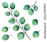 Watercolor Eucalyptus. Leaves ...