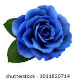 Realistic Blue Rose  Queen Of...