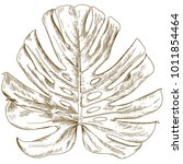 vector antique engraving... | Shutterstock .eps vector #1011854464