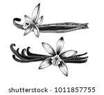 vanilla flower  and seed.  hand ... | Shutterstock .eps vector #1011857755