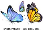 beautiful butterflies  hand... | Shutterstock . vector #1011882181
