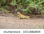 bright colored male green... | Shutterstock . vector #1011886804