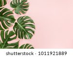 Tropical leaves monstera on...