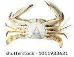 blue swimming crab on white...   Shutterstock . vector #1011933631