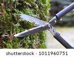 gardener is trimming a hedge.... | Shutterstock . vector #1011960751