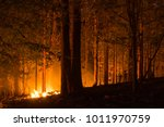 forest fire  wildfire burning... | Shutterstock . vector #1011970759