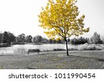 empty park bench under golden... | Shutterstock . vector #1011990454