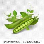 vector green peas. photo... | Shutterstock .eps vector #1012005367