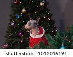 cute american hairless terrier... | Shutterstock . vector #1012016191