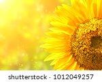 Bright Yellow Sunflower On...