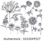 spring flowers isolated set.... | Shutterstock .eps vector #1012049527