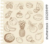 set of doodle fruits   for... | Shutterstock .eps vector #101205499