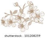 illustration flowers of the... | Shutterstock .eps vector #101208259