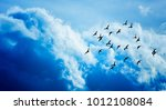 birds flying and abstract sky ... | Shutterstock . vector #1012108084