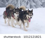 sledge dogs in the snowy winter | Shutterstock . vector #1012121821
