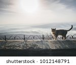 cat standing on the edge of the ... | Shutterstock . vector #1012148791