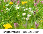 colorful flower meadow in... | Shutterstock . vector #1012213204