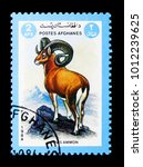Small photo of MOSCOW, RUSSIA - DECEMBER 21, 2017: A stamp printed in Afghanistan shows Argali or Mountain Sheep (Ovis ammon), Animals serie, circa 1984