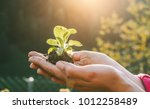 Small photo of Woman hands planting a seed during sunny day in backyard garden - Girl gardening at sunset in spring time - Focus on plant - Nature, lifestyle, green thumb and nurture concept