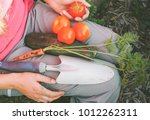 woman picking up vegetables... | Shutterstock . vector #1012262311