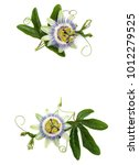 closeup shot of passion flower... | Shutterstock . vector #1012279525