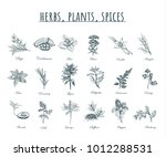 herbs  plants and spices   | Shutterstock . vector #1012288531