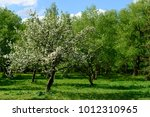outdoor spring view of... | Shutterstock . vector #1012310965