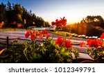 sunrise morning light beams...   Shutterstock . vector #1012349791