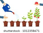 growth of plant in pot  from... | Shutterstock .eps vector #1012358671