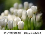 amazing nature concept of white ... | Shutterstock . vector #1012363285