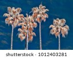 grouping of four palm trees... | Shutterstock . vector #1012403281