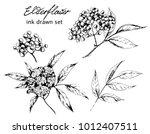 vector ink drawn set of elder... | Shutterstock .eps vector #1012407511
