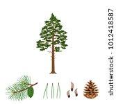 tree pine  branch  pine cone ...   Shutterstock .eps vector #1012418587
