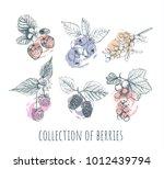berries set. collection of... | Shutterstock .eps vector #1012439794