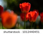 amazing nature concept of red... | Shutterstock . vector #1012440451