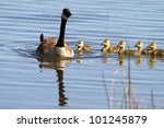 Mother Goose With Her Flock Of...