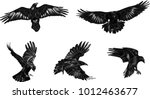 Stock vector set of black ravens hand drawn vector birds 1012463677